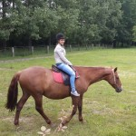 20.-cheval-gigi--150x150